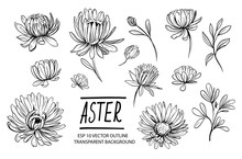 Set Of Aster Flowers. Hand Dra...