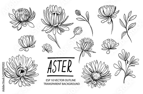 Photo Set of aster flowers. Hand drawn outline converted to vector