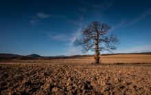 A Single Bare Tree On An Open Ploughed Field With Distant Hills On The Horizon And Clear Blue Sky With Just A Few Smooth Clouds