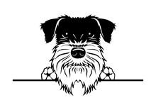 Schnauzer Dog Breed Face Head ...