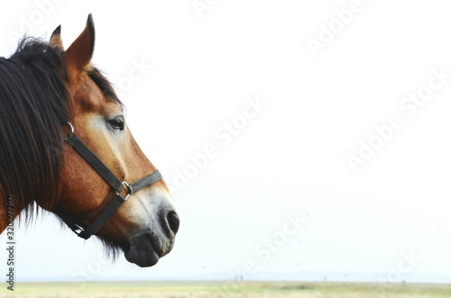 Canvas-taulu Cropped Image Of Horse Against Clear Sky