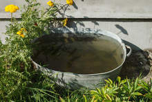 Old Metal Basin With Water