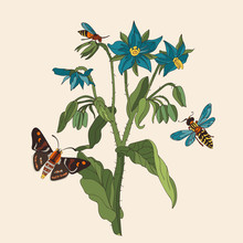 Botanical Illustration With Elements Of Cucumber Grass, Butterflies And Wasps