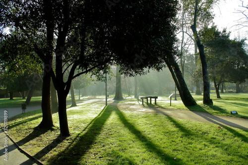 Photo parque al amanecer con fuerte contraluz entre la niebla matutina