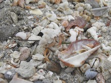 Close-Up Of Hermit Crab Amidst Shells At Beach
