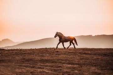 stallion in the sunset