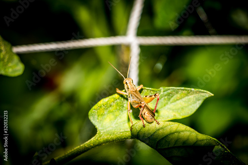 Tablou Canvas High angle view of grasshopper on leaf at vegetable garden