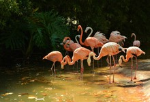 Flamingos In Pond On Sunny Day