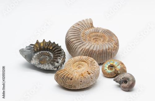 Ammonite fossil shells Wallpaper Mural
