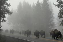 USA - Yellowstone