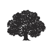 Oak Tree Logo. Isolated Oak Tr...