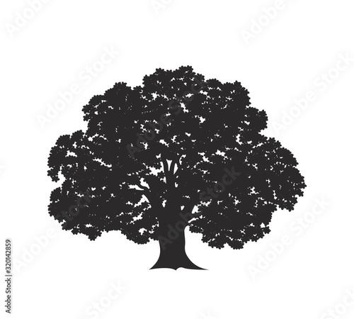 Oak tree logo. Isolated oak tree on white background Wallpaper Mural