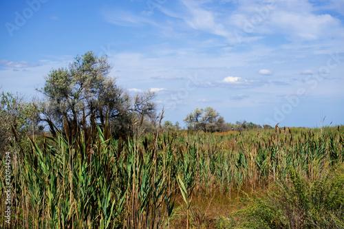 Wetlands in the area Maliy Sasik Lake Fototapeta