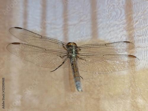 primer plano insecto grande libélula en España Wallpaper Mural