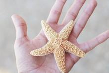 CLOSE-UP OF HAND HOLDING STARFISH