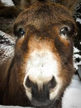 Cute Winter Photo. The Donkey ...