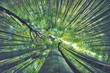 Leinwandbild Motiv LOW ANGLE VIEW OF BAMBOO TREES AGAINST SKY