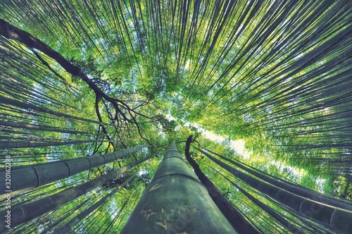 LOW ANGLE VIEW OF BAMBOO TREES AGAINST SKY - fototapety na wymiar