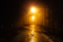 Autumn City Park At Night In Fog