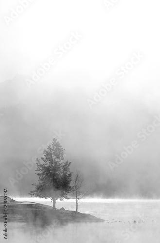 Foto bianco e nero di un albero avvolto da una leggera nebbia che sorge dal lago Canvas Print