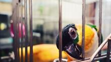 Close-Up Of Caique In Birdcage