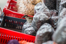 Sparrow Perching On Plastic Bag