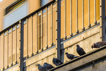 Low Angle View Of Pigeons Outside Building