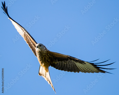 LOW ANGLE VIEW OF bird FLYING AGAINST CLEAR BLUE SKY Fotomurales