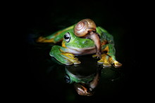 Close-Up Of Snail And Frog On Glass Against Black Background