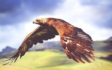 Close-up Of Flying Eagle