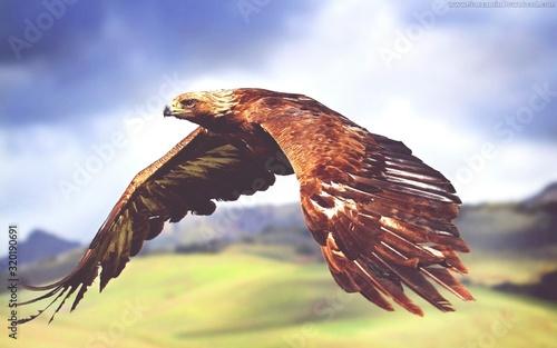 Valokuva close-up of flying eagle