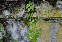Moss On The Wall Green Leaves
