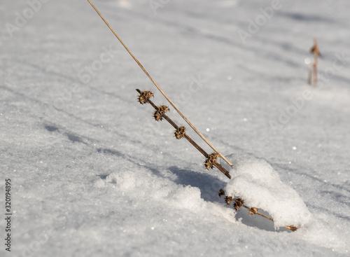 winter background of shrivelled vegetation on glistening new snow Canvas-taulu