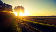 Dog Standing On Grassy Field During Sunset