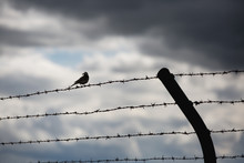 Low Angle View Of Silhouette Birds Perching On Barbed Wire Against Cloudy Sky