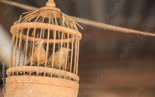 Tablou Canvas Close-Up Of Damaged Old Birdcage