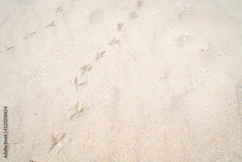 Cuadros en Lienzo 砂浜の鳥の足跡の写真