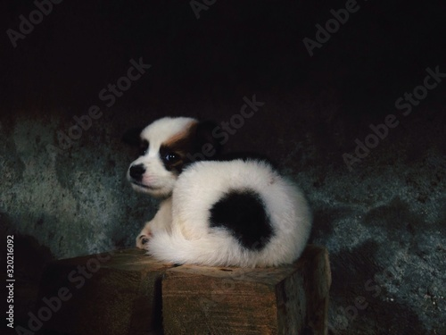 Photo CLOSE-UP OF CUTE DOG