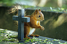 CLOSE-UP OF SQUIRREL ON CEMETERY