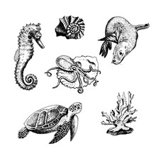 Ocean Life And Marine Creature...