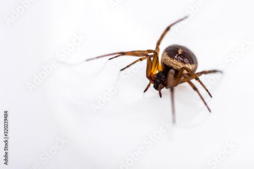 CLOSE-UP OF SPIDER ON WHITE BACKGROUND Tapéta, Fotótapéta