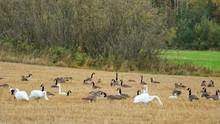 FLOCK OF BIRDS ON GRASSY FIELD