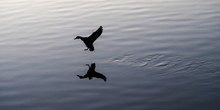 SILHOUETTE BIRD FLYING OVER LAKE AGAINST SKY DURING SUNSET