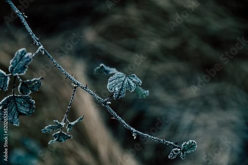 Photographie leaf