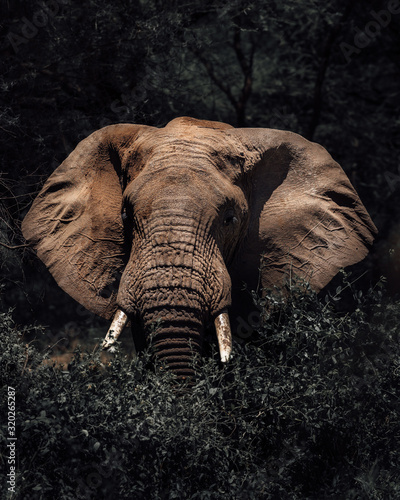 Fototapeta close up elephant obraz