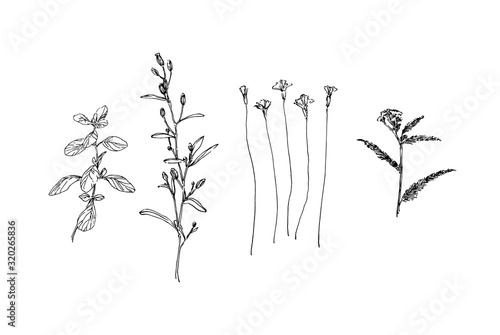 Obraz Set of different hand drawn wild plants. Outline herbs with leaves and flowers ink painting. Black isolated sketch vector on white background - fototapety do salonu