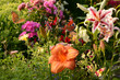 Leinwanddruck Bild Schmetterling 647