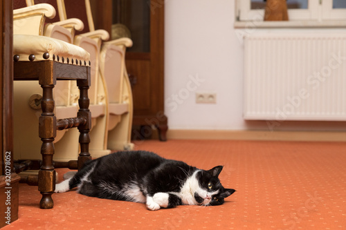 Obraz Black Cat Lying By Chair On Floor At Home - fototapety do salonu