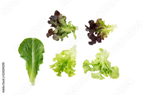 Fototapeta Leaf fresh green oak and red oak and green cos romaine lettuce vegetable for salad with nutrient for health isolated on white background, agriculture and harvest for nutrition, healthy food concept. obraz
