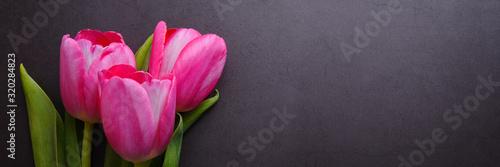 Fototapeta A bouquet of beautiful bright pink tulip close-up against a dark gray stucco wall. obraz